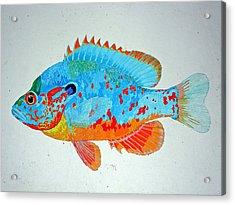 Pretty Blue Fish Acrylic Print by Don Seago