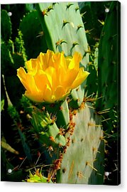 Pretty But Do Not Touch  Acrylic Print