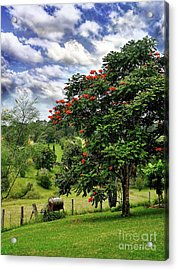 Pretty Countryside Acrylic Print by Kaye Menner