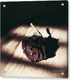 Pretty Dead Rose Resting In The Warm Sun Acrylic Print