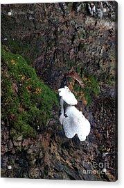 Pretty Forest Underneath  Acrylic Print by Steven Digman