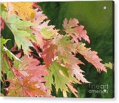 Looking Pretty In Autumn Acrylic Print