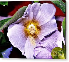 Pretty In Mauve Acrylic Print by Reb Frost