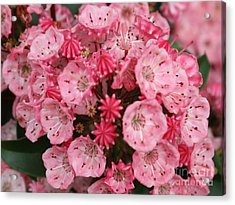 Pretty In Pink Acrylic Print by Amy Holmes