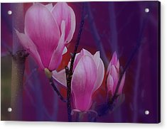 Acrylic Print featuring the photograph Pretty In Pink by Athala Carole Bruckner
