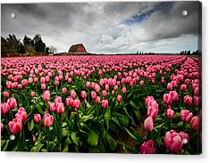 Acrylic Print featuring the photograph Pretty In Pink by Dan Mihai