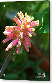 Pretty In Pink Acrylic Print by DazzleMe Photography