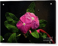 Acrylic Print featuring the photograph Pretty In Pink by Douglas Stucky