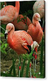 Pretty In Pink Acrylic Print by Martina Fagan