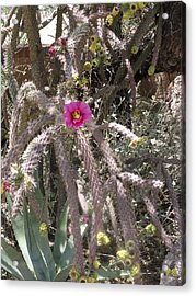 Flower Is Pretty In Pink Cactus Acrylic Print