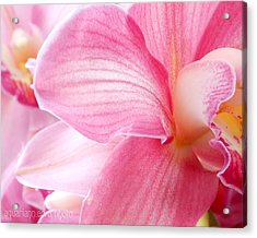 Pretty In Pink Orchid Petals Acrylic Print
