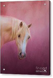 Pretty In Pink - Palomino Pony Acrylic Print by Michelle Wrighton