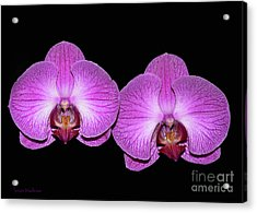 Pretty In Pink Phalaenopsis Orchids Acrylic Print by Susan Wiedmann