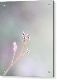 Pretty In Pink Acrylic Print by Rebecca Robinson