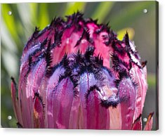 Acrylic Print featuring the photograph Pretty In Purple by Nathan Rupert