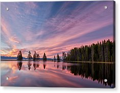 Pretty Is Pink Acrylic Print by Jon Glaser