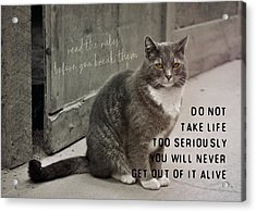 Pretty Kitty Quote Acrylic Print by JAMART Photography