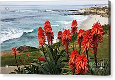 Pretty La Jolla View Acrylic Print by Jasna Gopic