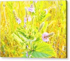Pretty Lilac Acrylic Print