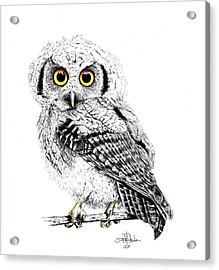 Pretty Little Owl Acrylic Print by Isabel Salvador