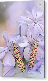 Pretty Pair Acrylic Print by Jimmy Hoffman