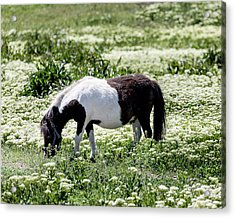Pretty Painted Pony Acrylic Print by James BO Insogna