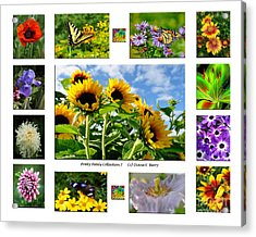 Pretty Petals Collection I Acrylic Print by Diane E Berry