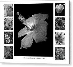 Pretty Petals Collection II Acrylic Print by Diane E Berry