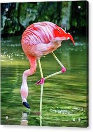 Pretty Pink Flamingo Acrylic Print