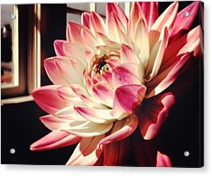 Pretty Pink Acrylic Print by JAMART Photography