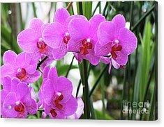 Pretty Pink Phalaenopsis Orchids #2 Acrylic Print