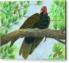 Pretty Redhead Turkey Vulture Acrylic Print by Jeanne Kay Juhos
