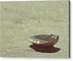 Pretty Seashell Acrylic Print by JAMART Photography
