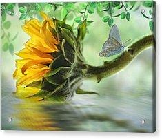 Pretty Sunflower Acrylic Print