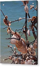 Acrylic Print featuring the photograph Previously Loved Treasures by Michiale Schneider