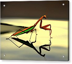 Preying Mantis Acrylic Print by Aron Chervin