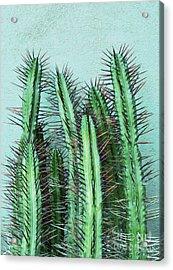 Prick Cactus Acrylic Print