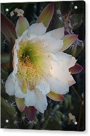 Acrylic Print featuring the photograph Prickley Pear Cactus by Kate Word