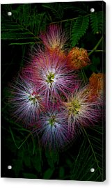 Prickly Flower Acrylic Print by Christopher Lugenbeal