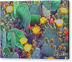 Prickly Pear Cactus 2 Acrylic Print by Methune Hively