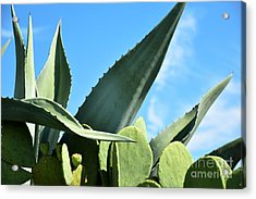 Acrylic Print featuring the photograph Prickly Pear Cactus And Century Plant by Ray Shrewsberry