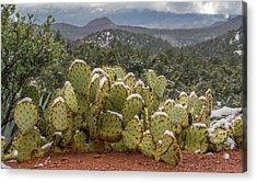 Cactus Country Acrylic Print