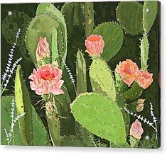 Prickly Pear Acrylic Print by Carole Boyd