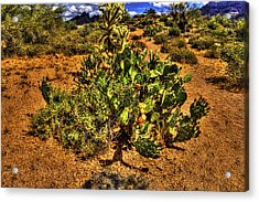 Prickly Pear In Bloom With Brittlebush And Cholla For Company Acrylic Print