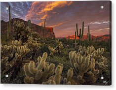 Prickly Pink Peralta Acrylic Print by Peter Coskun