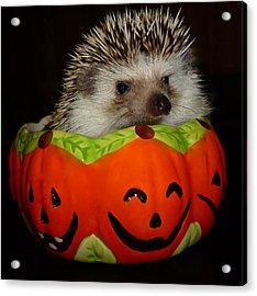 Prickly Pumpkin Acrylic Print