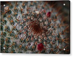 Prickly Acrylic Print by Renee Holder