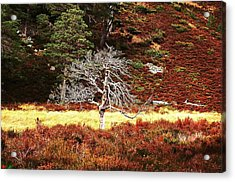 Acrylic Print featuring the photograph Pride by HweeYen Ong