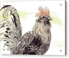 Pride Of A Rooster Acrylic Print