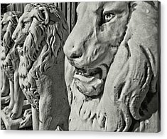 Pride Of Lions Acrylic Print by JAMART Photography